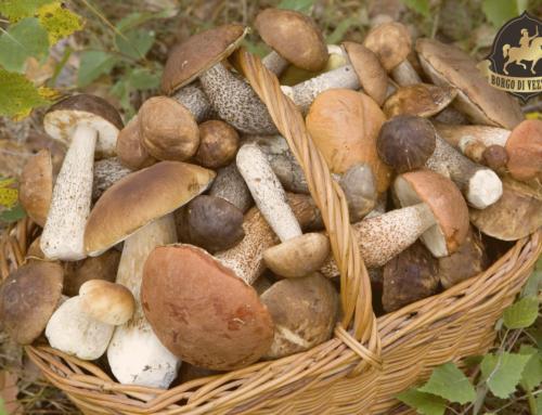 La passione per i funghi al Borgo di Vezzano